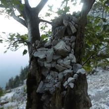 Mit Steinen gefüllter Baumstumpf