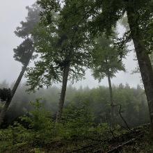 Nebliger Start des Trails - leider geil :-D
