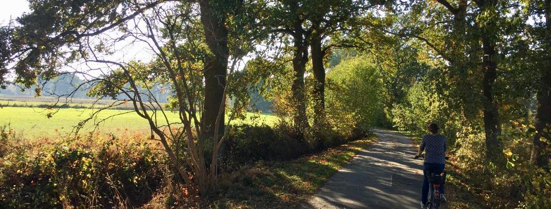 Weg zum Wollnysee