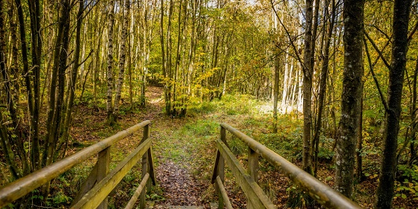 Wandern in Rocherath - Johny-Brückchen