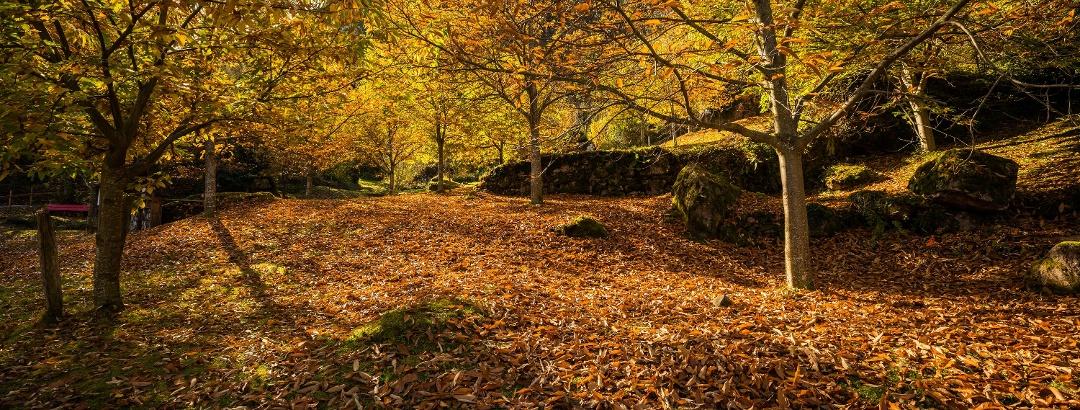 Einblicke in den Murger Kastanienwald