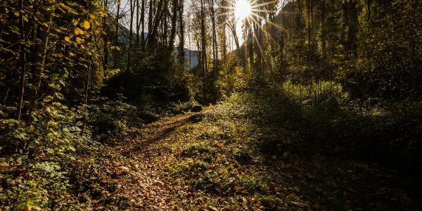 Idyllischer Weg durch den Kastanienwald