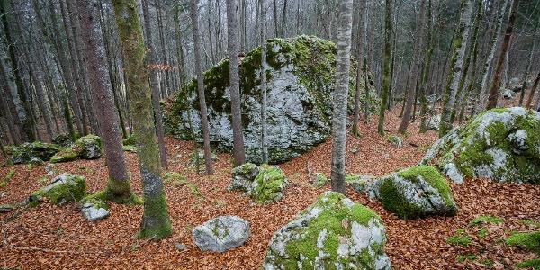 Balvan v gozdu