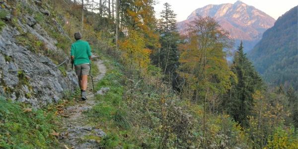im Steilwald