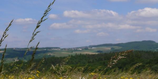 Blick bei Bodenbach