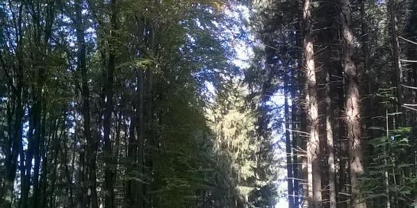 dem Waldweg folgen