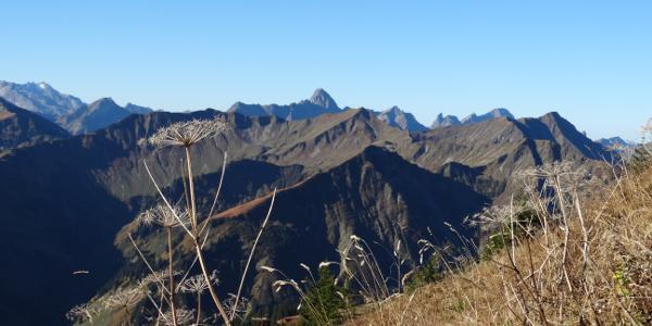 Gipfel bis zum Bregenzerwald vom Walmendingerhorn