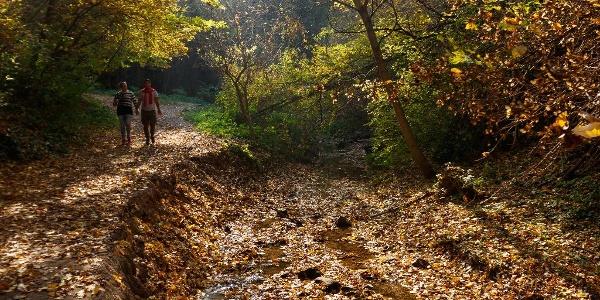 A Jegenye-völgyi vízesésnél ősszel