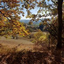 Foto von Wanderung: Neues Leben • Nahe (21.10.2018 16:29:23 #1)