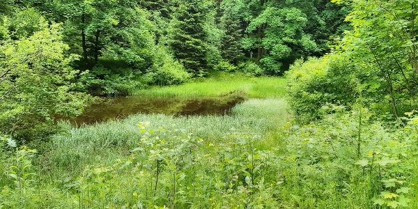 Teich bei Ilsequelle