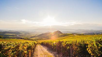 Piemont: Wandern un Wein