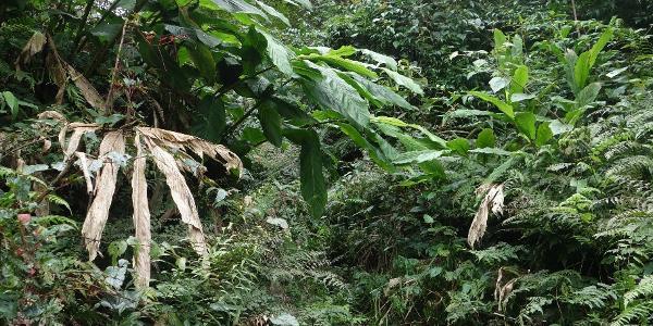 Wegfindung im Wald, ja der Weg geht direkt geradeaus