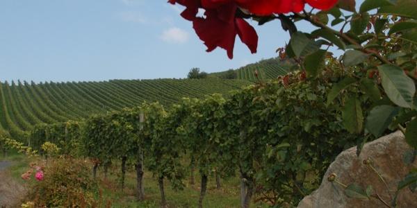 Weinpanoramaweg Heilbronn
