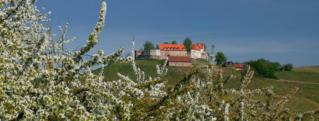 Schloss Staufenberg im Frühjahr