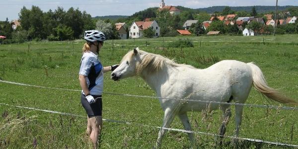 Szentbékkálla határában barátságos lovakkal találkoztunk