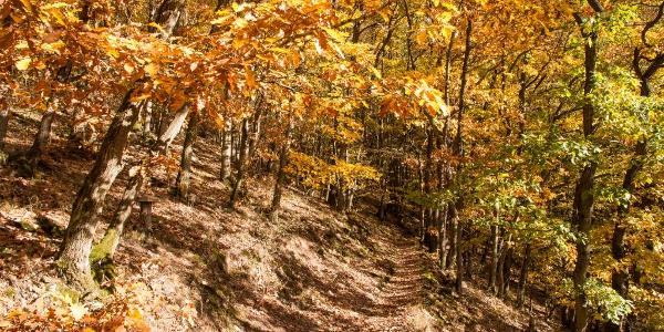 Das Laub der Eichen wechselt vom letzten Grün zu einem zarten Gelb bis hin zu einem kräftigen Braun-Rot, …