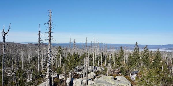 Blick in den Böhmerwald