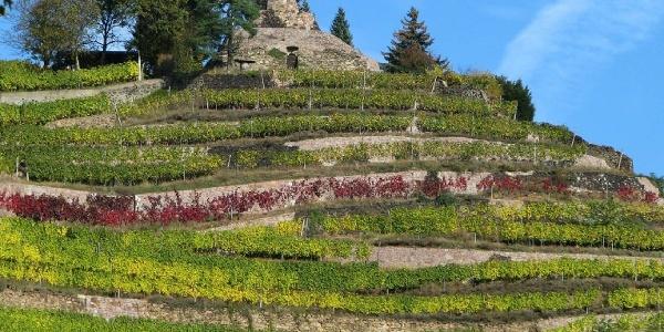Schnecke im Weinberg, Weingut Drei Herren