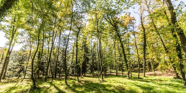 Edenkobener Wald