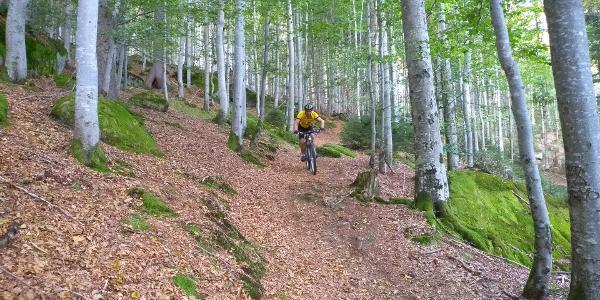 Trail vom Klausgupf