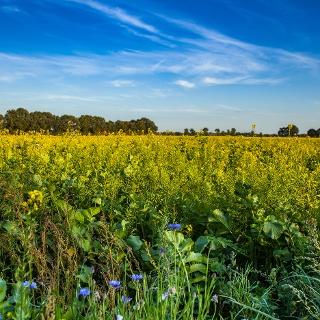 Sommerliche Landschaft in Molbergen