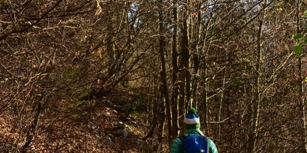Der Pfad am Anfang durch den Wald