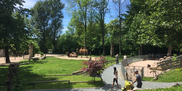 Blick auf den Tiergarten Falkenstein