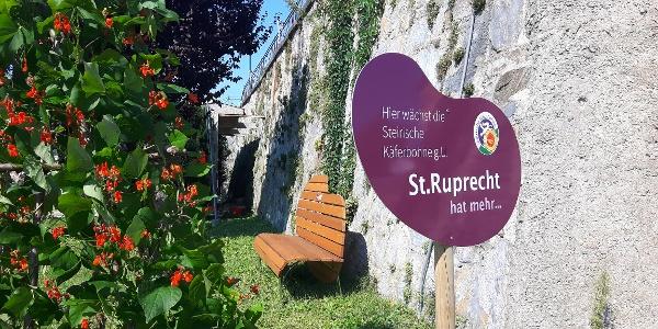 Käferbohne am Hauptplatz in St. Ruprecht an der Raab (c) TV St. Ruprecht an der Raab, Steininger