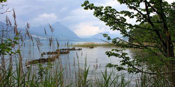 Naturschutzgebiet Weissenau.