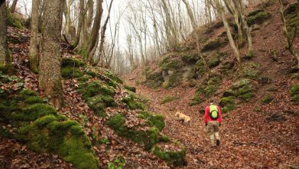 A Kajta-forrást elhagyva mohás sziklák közt érünk be a régi erdőbe