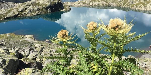 5-Seen-Wanderung am Pizol