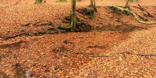 A Réka-völgy talán ősszel mutatja legszebb arcát
