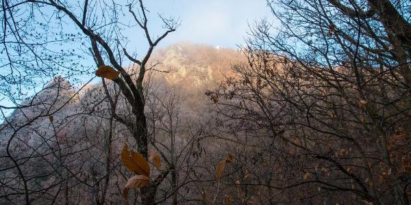 Dichter Nebel liegt noch über dem Tal, der Drachenfels ist schon von der Sonne beschienen.