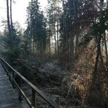 mitten im Bannwald