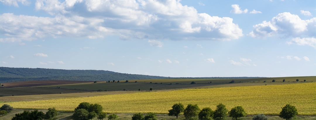 Dobrogea/Dobruja Green Landscape