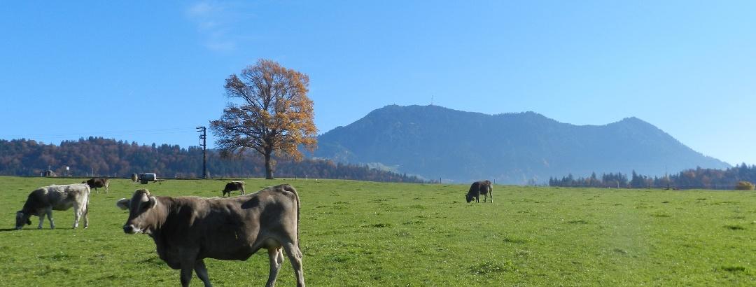 Grünten im Hintergrund, zwischen Freidorf und Untermaiselstein