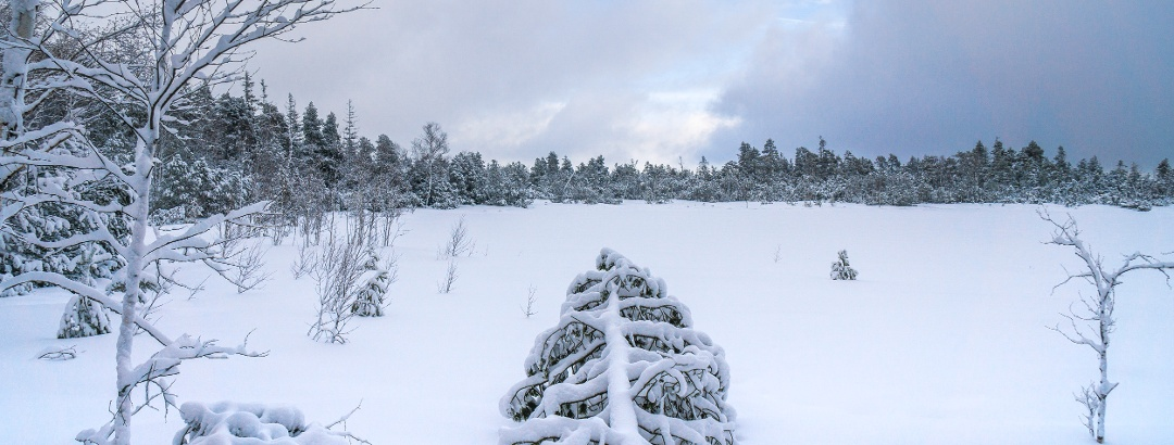 Das Wildsee-Hochmoor am Kaltenbronn versteckt unter einer Schneedecke