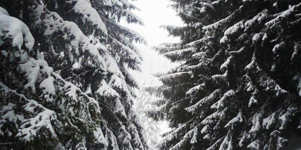 Abzweigung nach links in den Wald