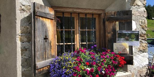 Blumen bei der Alp Sardona