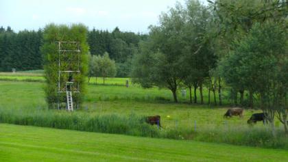 Neue Kunst am Ried - Baubotanischer Turm