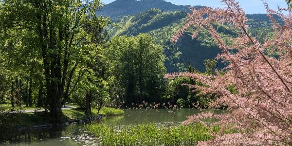 Der Giessenpark im Sommer