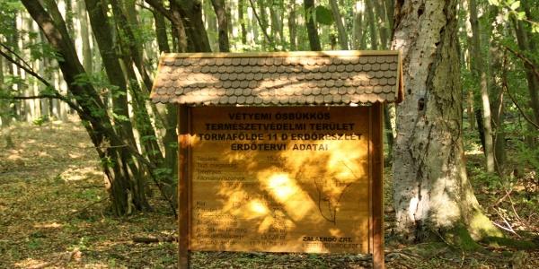 A Vétyemi Ősbükkös erdészeti információs táblája