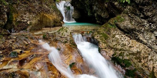 The Šunik water grove