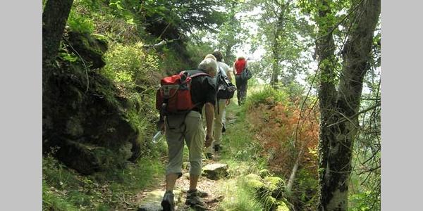 Auf dem Wandertrail bei der Elsbethhütte