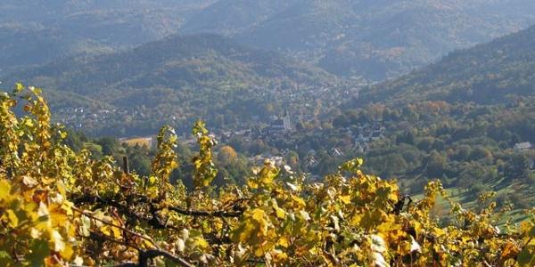 Weinberge rund um Staufenberg