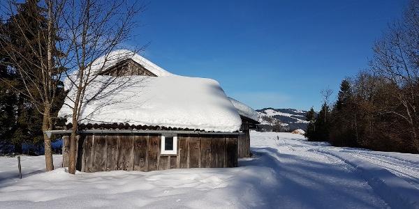 Loipe und Winterwanderweg in Alberschwende