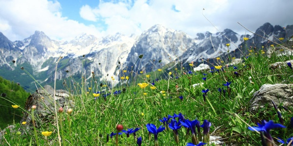 Blütenpracht in der Bergwelt Albaniens