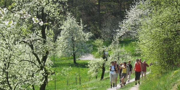 Wandergruppe in Frühlingslandschaft