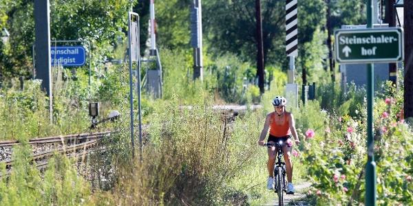 Radfahren an der Mariazellerbahn