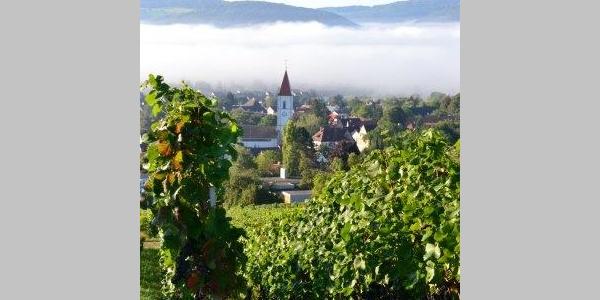 Weingut Erzingen